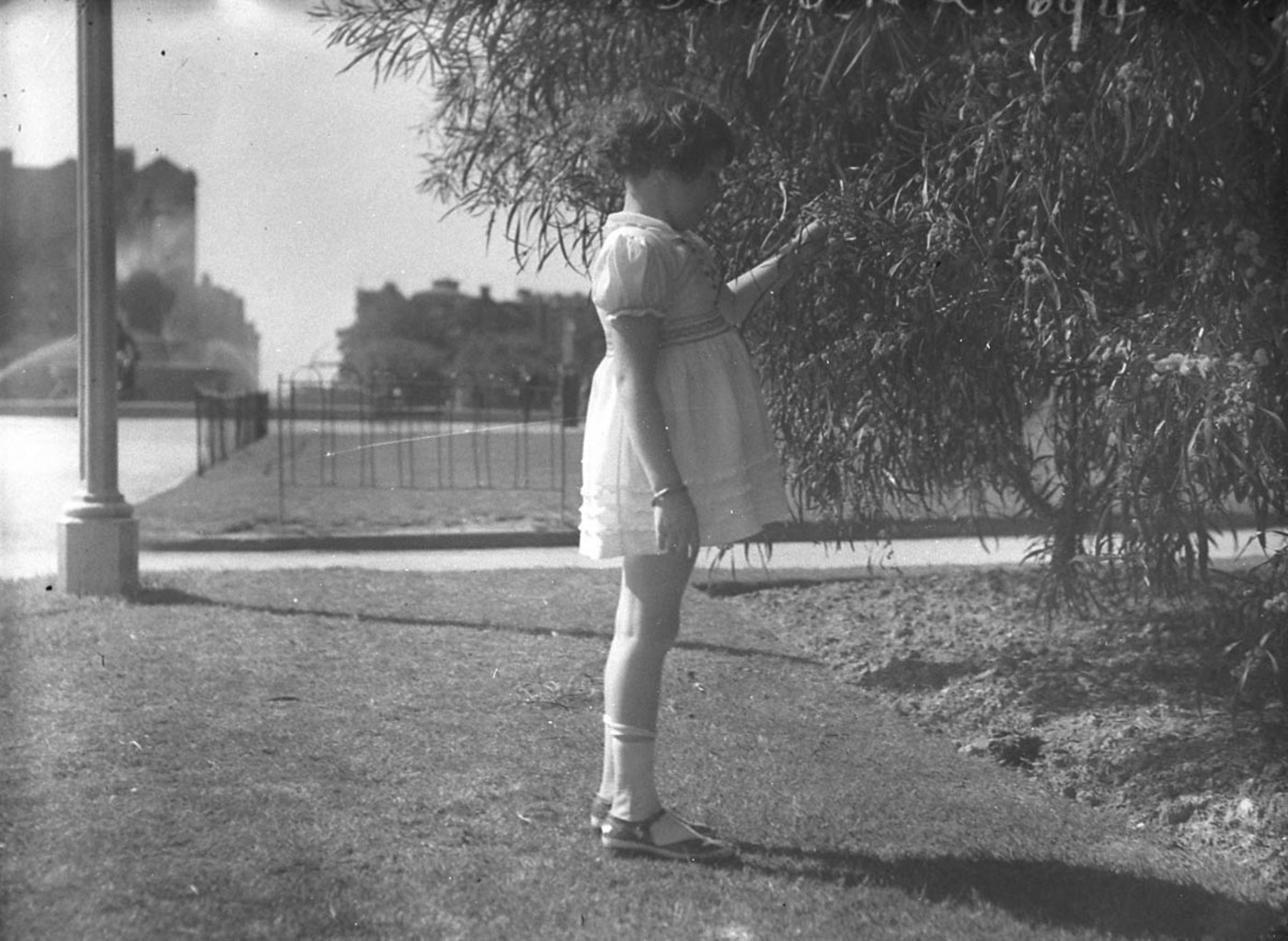 A little girl admires the Spring blooms, 19 Sept. 1934, by Sam Hood