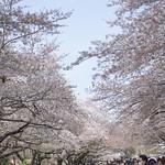 0405_ueno-4
