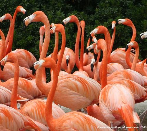 Flamingos klein copyr