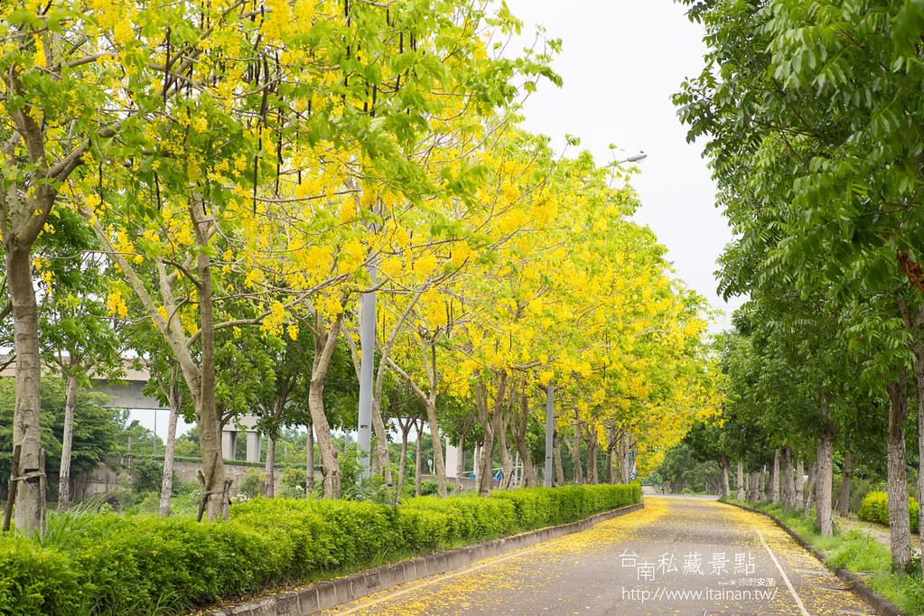 台南私藏景點--高鐵阿勃勒 (5)