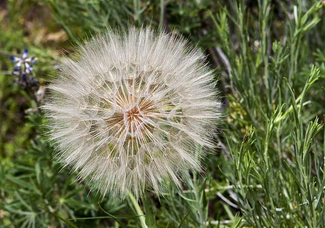 Wild Flower 20d_2207