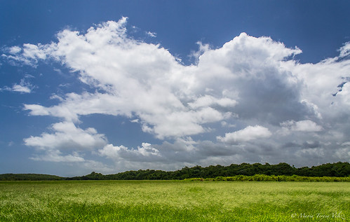 green outside puertorico outdoor bluesky caribbean manati naturephotography