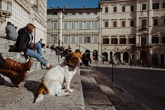 Meet William, a dog from Perugia, Italy #leicaQ #leica #leicacamera #leicaqtyp116 #leicacraft #leica_photos #leica_uk #leica_world #leicaphotography #twitter #streetphotography #everybodystreet #streetphoto #street #italy #perugia #umbria #william #dog