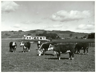 South Auckland farmland: D.C. Brown's farm, Clevedon Road, Papakura