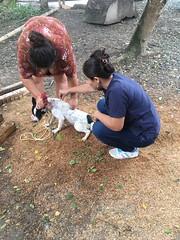 Municipio y Distrito de Salud de Chone en campaña contra la rabia canina y felina
