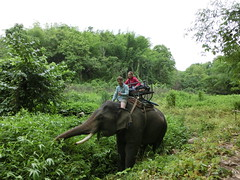 Michi der Mahout - Dschungel Chiang Rai