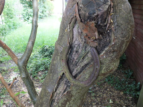 Horseshoe on tree