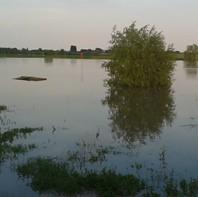 Hoog water in de Nederrijn