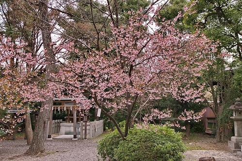 【写真】2013 桜 : 車折神社/2019-09-15/IMGP8797