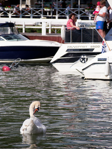summer people reflection water port marina boat swan naantali pvanhala