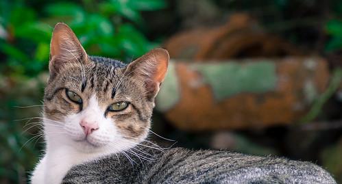 壺屋やちむん通りの猫