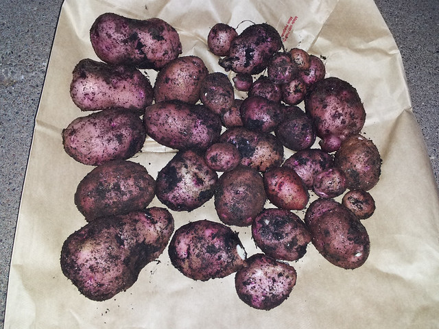 taters--20130904