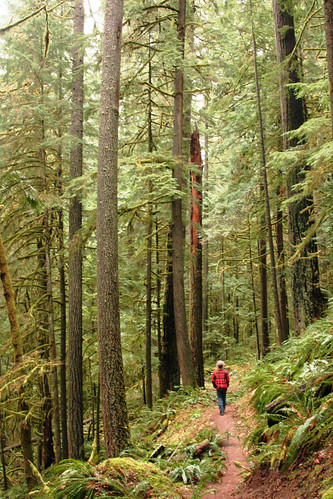 Be aware of your surroundings when visiting National Forest System land.  Deception Creek Trail. Willamette National Forest, Oregon. (US Forest Service photo)