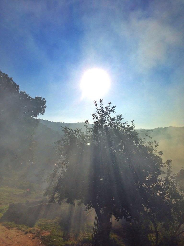 Rayos de sol [11/365]