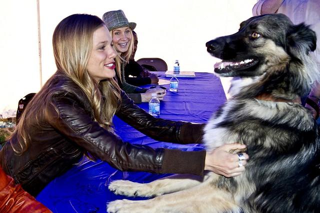 Dog Rescue Tracy Ca