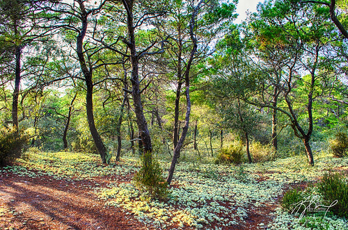 statepark camping nature forest moss natural florida pines lichen scrub hdr stjoebay stjoepeninsulastatepark thephotographyblog