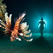 farewell lionfish by samebody