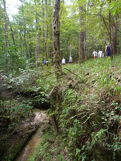 Hike along Means Creek in Torreya State Park