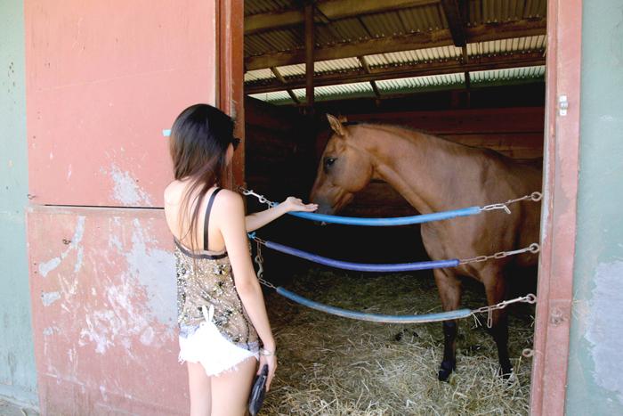 horsey2