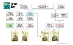 Gorilla Family - Bronx - Bachelor Group (2013)