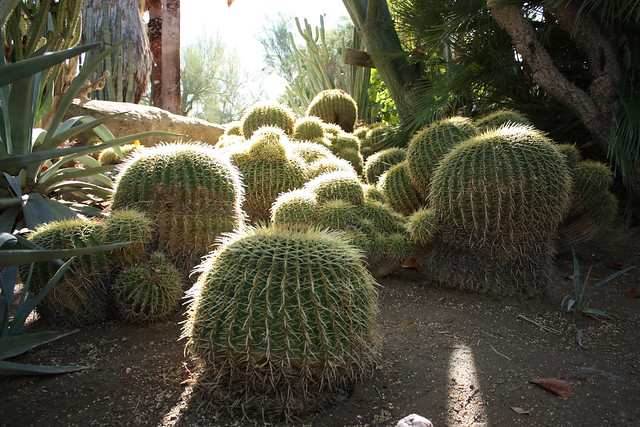 Moorten Botanical Garden Palm Springs California The Everywhereist