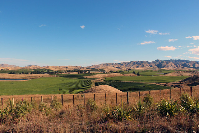 Blenheim Wine Yards