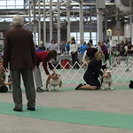 Indy Winter Classic Dog Show