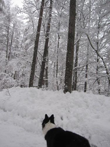 今日も雪が降りました・・・2014.3.5 by Poran111
