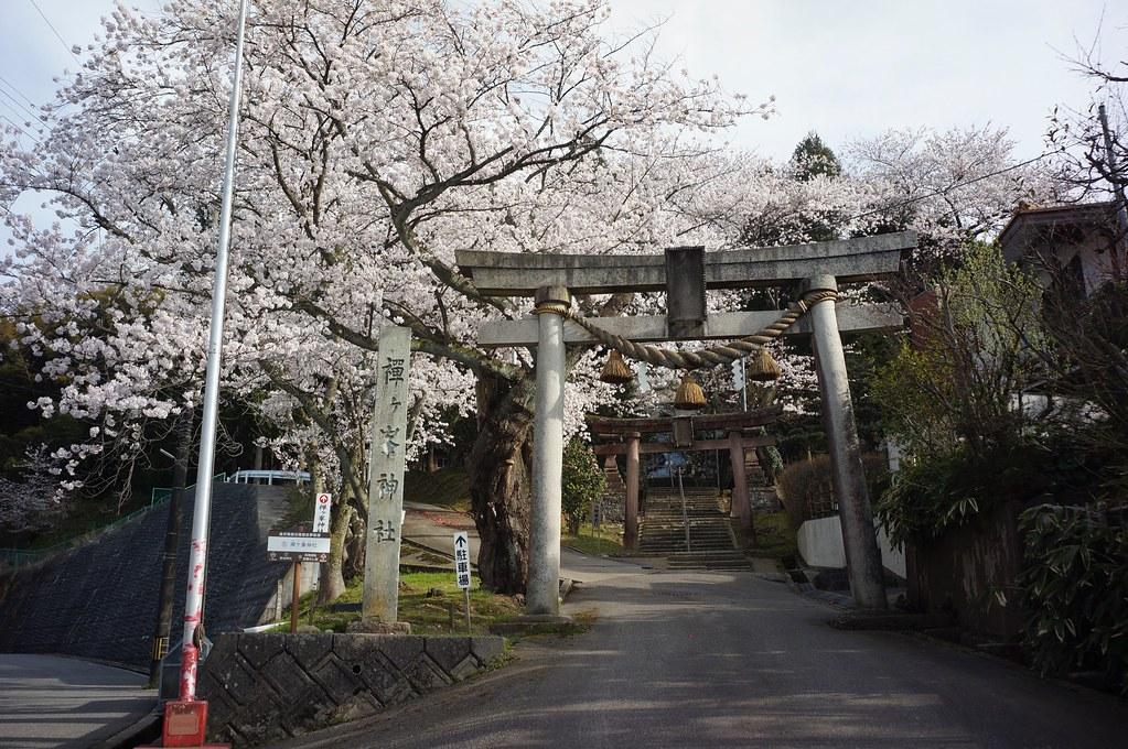 桜満開 禅ヶ峰神社から高尾城址公園へ