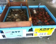 南三陸町、志津川湾産のホタテとホヤだよ。(^-^) 戸倉の漁協直売所タブの木さんで。