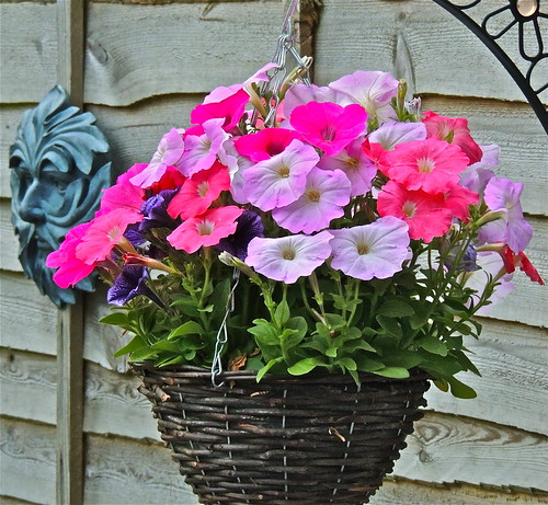 Petunia Basket ......(175/365) by Irene_A_