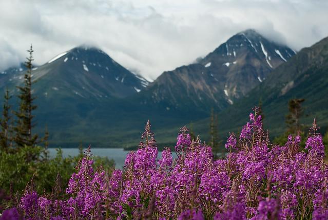 Northern British Columbia Mountain Scene