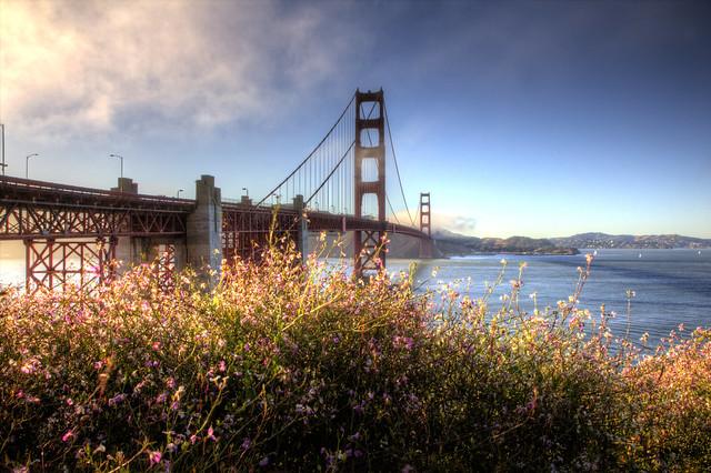 Golden Gate Bridge in bloom