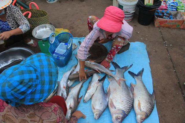 Morning fish market by sekong river flickr photo sharing for River fish market