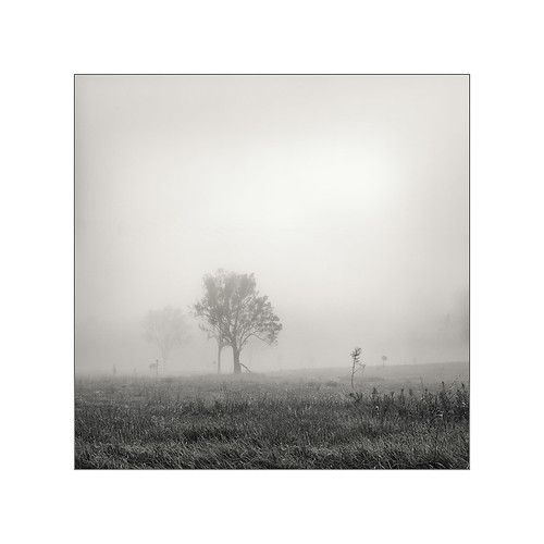 tree fog ripley
