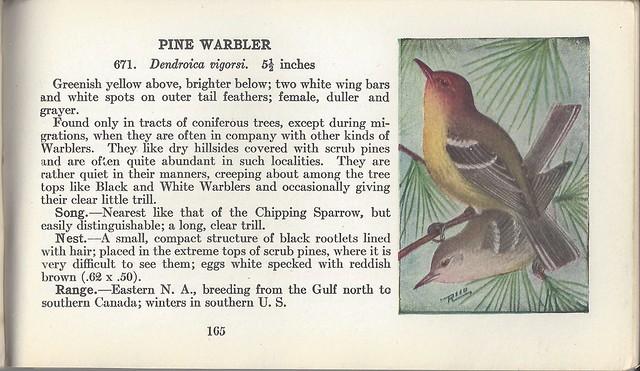 ReedPine Warbler