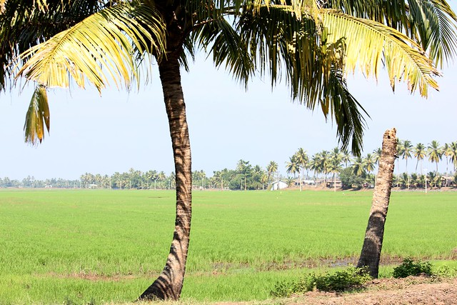 Header of Alappuzha