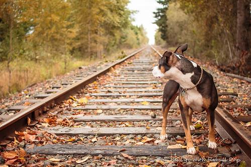 Train Tracks-9535