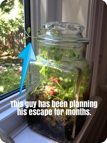 Our terrarium update