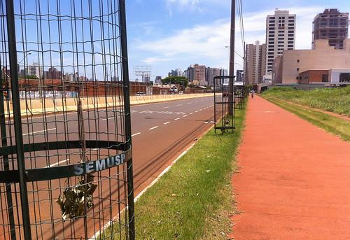 Avenida Raccanello - ipês brancos