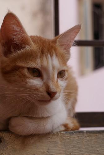 cute kitten ...