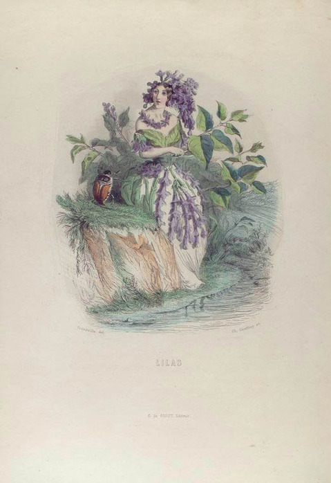 Language of Flowers, Les fleurs animées, female flowers, talking flower,  flower's costume, flower's dress, vintage flower, vintage women, flower fairy