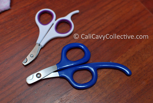 Guinea pig nail clippers in small and large size