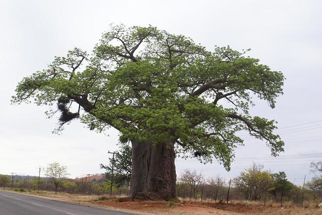 Sudáfrica - Mapungubwe
