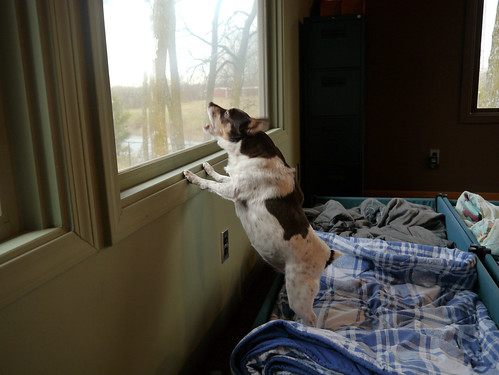 2013-11-16 - Rennie Barking at a Bird - 0004
