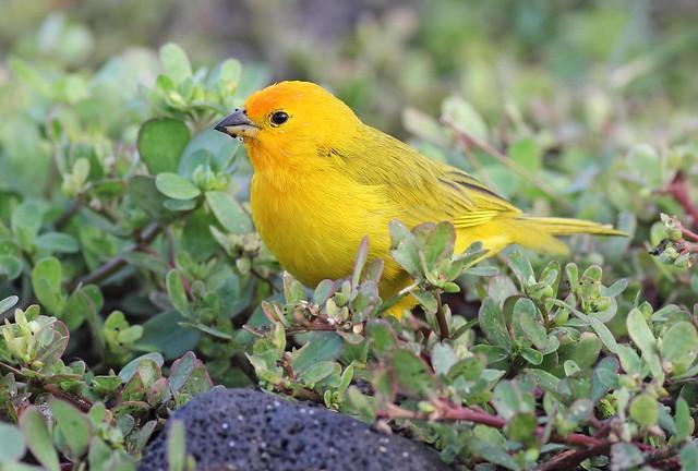 Common Birds Of Hawaii Big Island