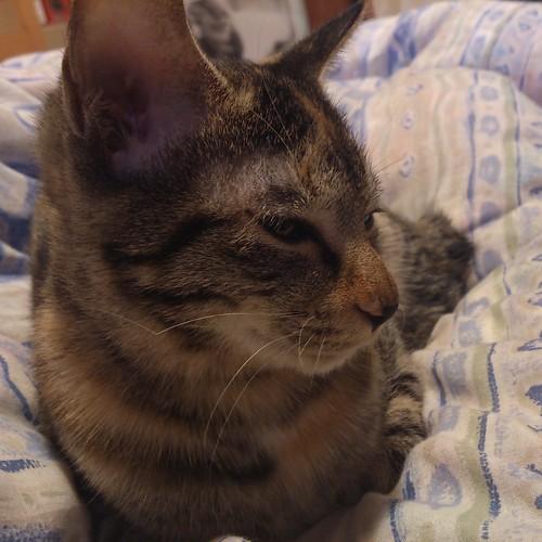 寒くなってちょっと調子が悪いのね。でも昨日の注射が効いたのか朝ご飯は少しだけ食べられたよ by Chinobu