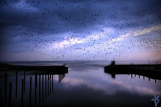 ~~ thousands of migrant birds on their way back~~ [ on explore ]