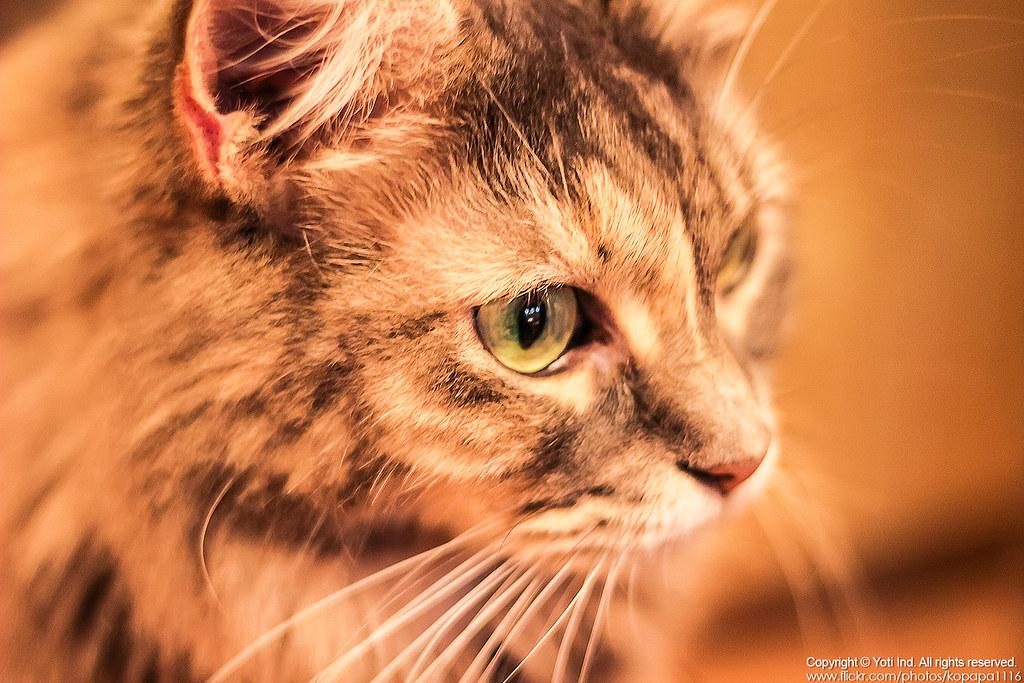 元氣貓主題餐廳 IMG_6082