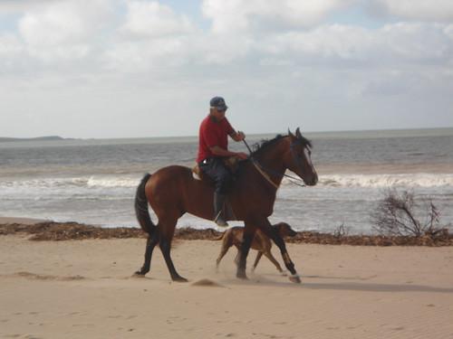 Caballo, Playa Chihuahua/Horse, Chihuahua Beach, Portezuelo, Maldonado, Uruguay - www.meEncantaViajar.com by javierdoren